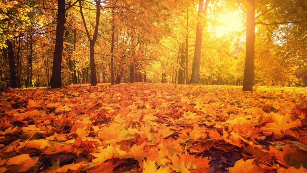 Yin Yoga for autumn